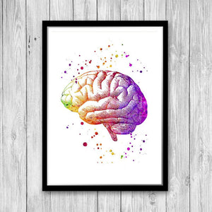 Human Brain Atnatomy Art - PrintsFinds