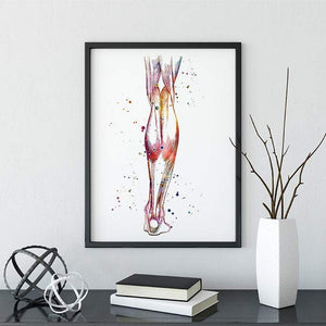 Human Calf anatomy art print - PrintsFinds