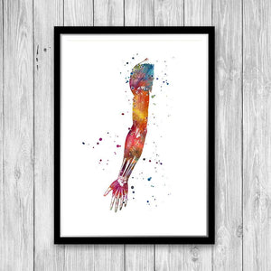 Human Hand Muscles Arm Anatomy Art - PrintsFinds