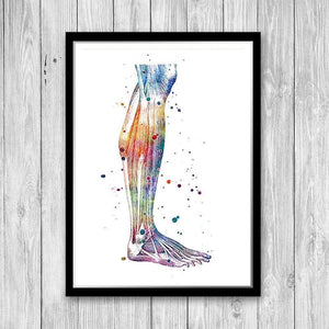 Human Leg Anatomy Art - PrintsFinds