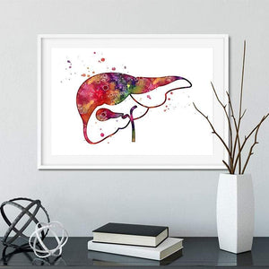 Liver and Gall Anatomy Art - PrintsFinds