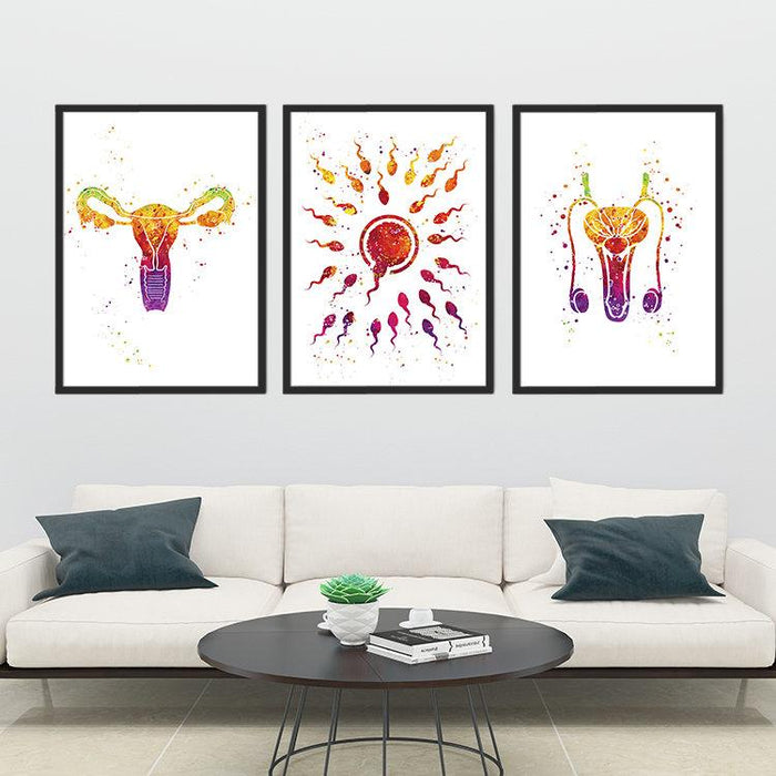 Male and Female Reproductive System Fertilization Set of 3 prints