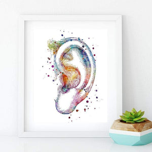 Outer Ear the Auricle - PrintsFinds
