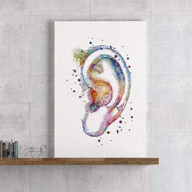 Outer Ear the Auricle