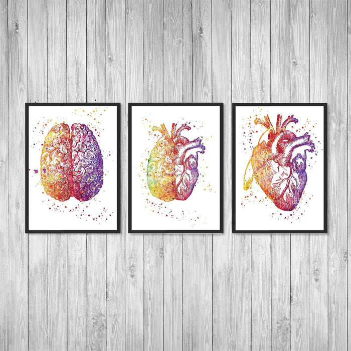 Set of 3 Prints Brain and Heart Doctors Office Wall Decor