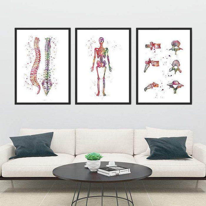 Spine, Skeleton and Vertebral Bones Set of 3 prints