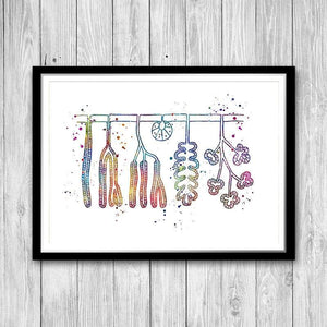 Types of Exocrine Gland watercolor print Scinece biology art - PrintsFinds