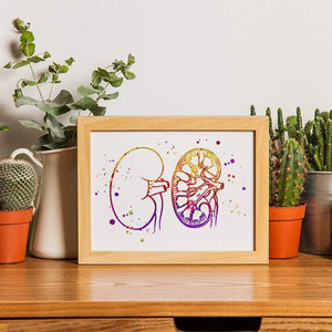 Urology art Kidney anatomy art print - PrintsFinds