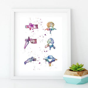 Vertebrae Bones, watercolor art print - PrintsFinds
