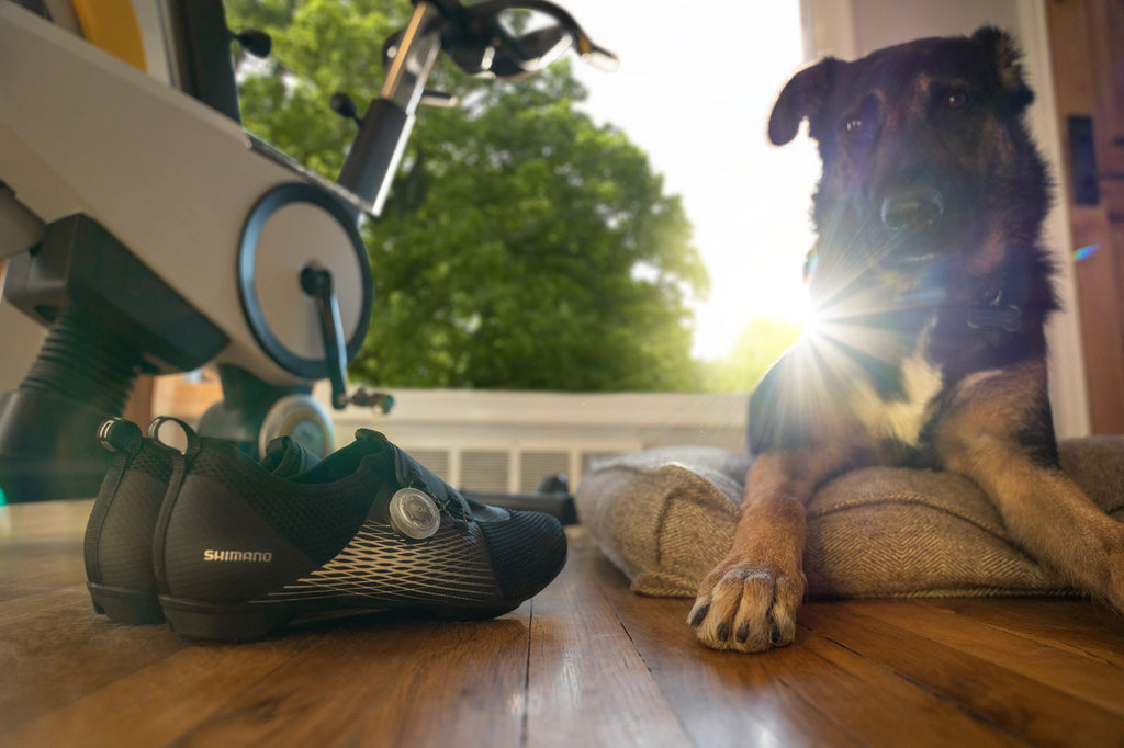 Man's best friend with Shimano SH-IC500 indoor cycling shoes