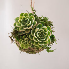 Load image into Gallery viewer, Kokedama (small Succulent)