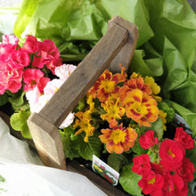 Load image into Gallery viewer, Double Primula Rustic Flower box