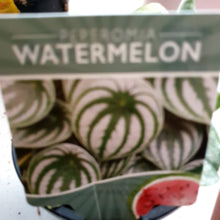 Load image into Gallery viewer, Watermelon gift set