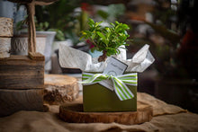 Load image into Gallery viewer, Bonsai gift set (sm)