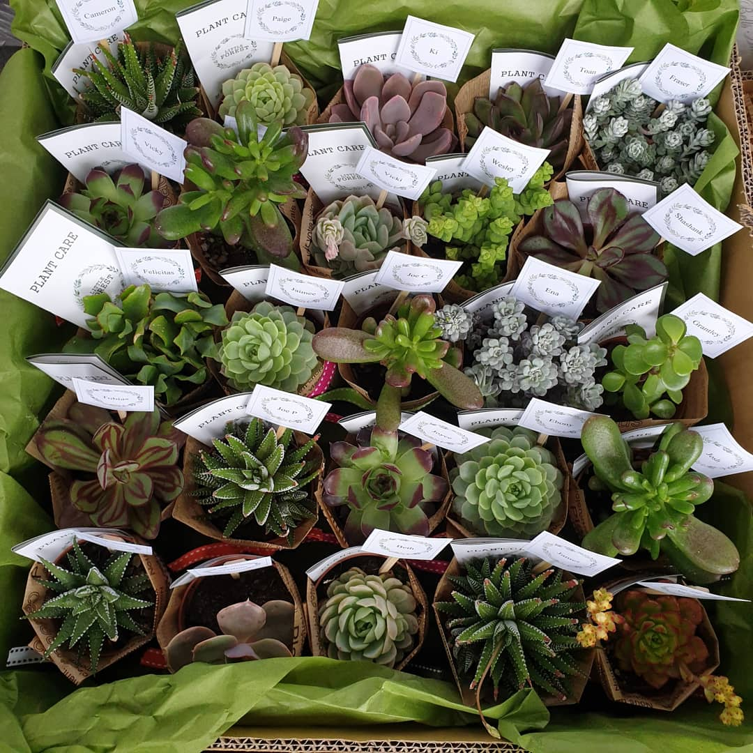 Succulents gift/  event set(quote only)