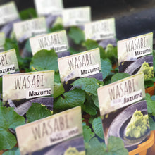 Load image into Gallery viewer, Wasabi plant