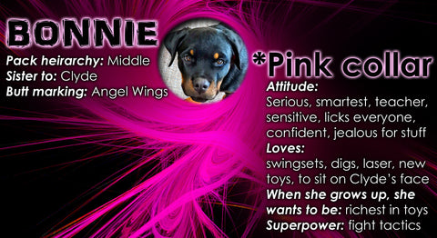 Bonnie Bio Page with funny Rottweiler facts and stats about her
