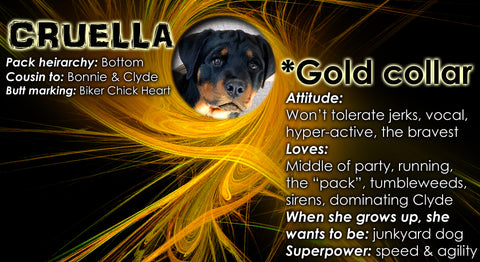 Cruella Bio Page with funny Rottweiler quirks about her