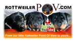 Rottweiler POV three pure bred German Rottweiler puppies the faces of Bonnie Clyde and Cruella