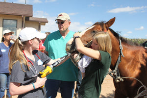 Essential Horse Care