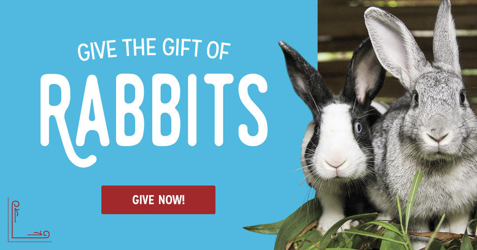 Give the gift of a rabbit!