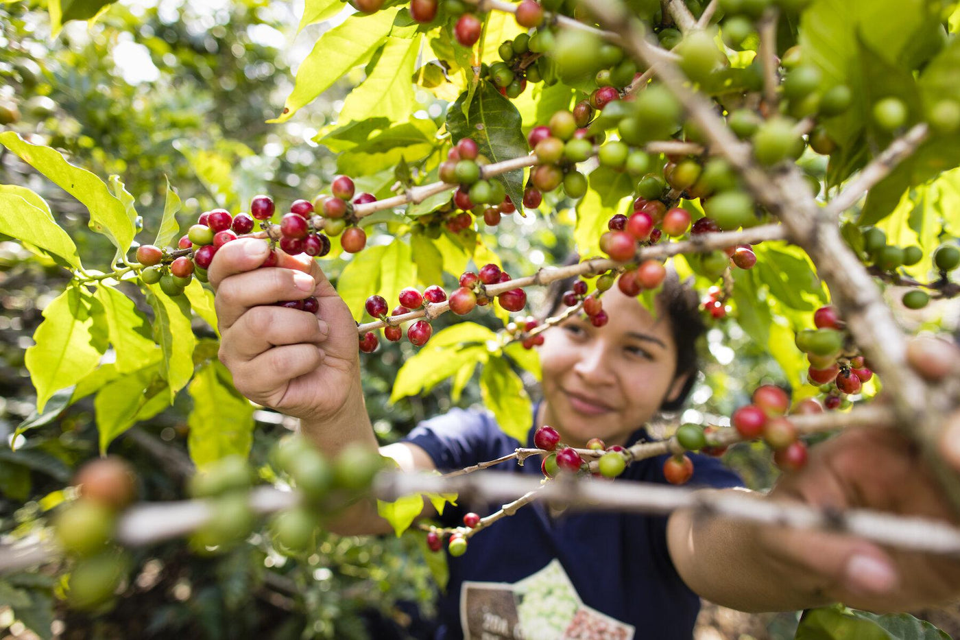 International Women's Day: Celebrating our Women Coffee Producers