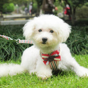 HARNESS VEST & LEASH - Pet harnesses