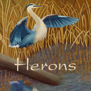Wetlands-Great-Blue-Heron-Herons-Collection
