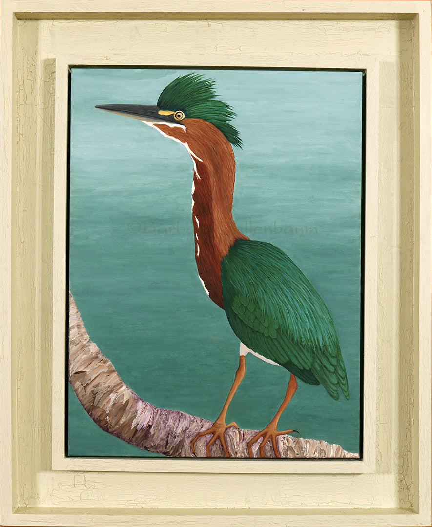 Green Heron Parents - Father - Original Oil