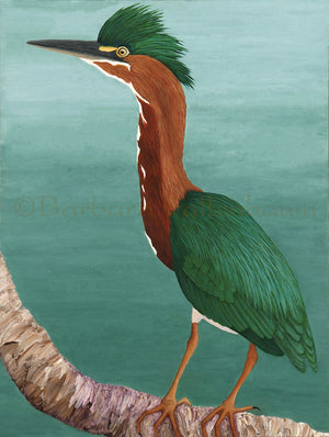 Original Oil Painting of a male Green Heron