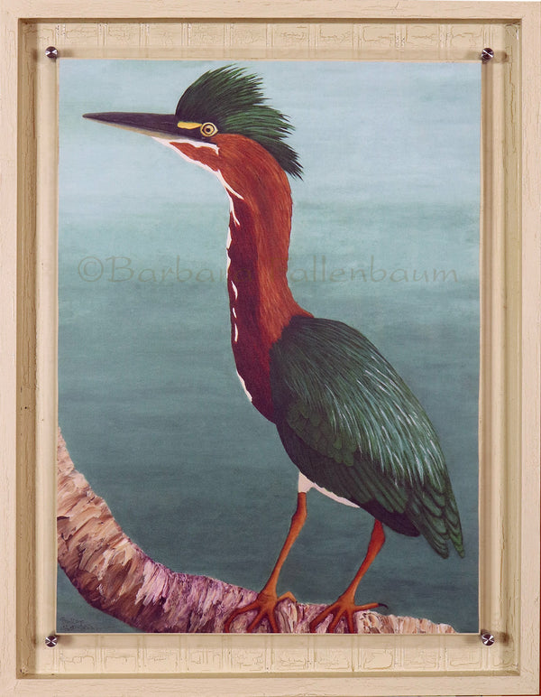 Hand embellished giclee in stand off mount frame of a Green Heron Parent - Father