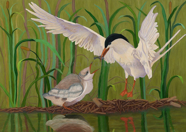 Royal Tern Feeding Baby - Original Oil Original Oils Barbara Fallenbaum