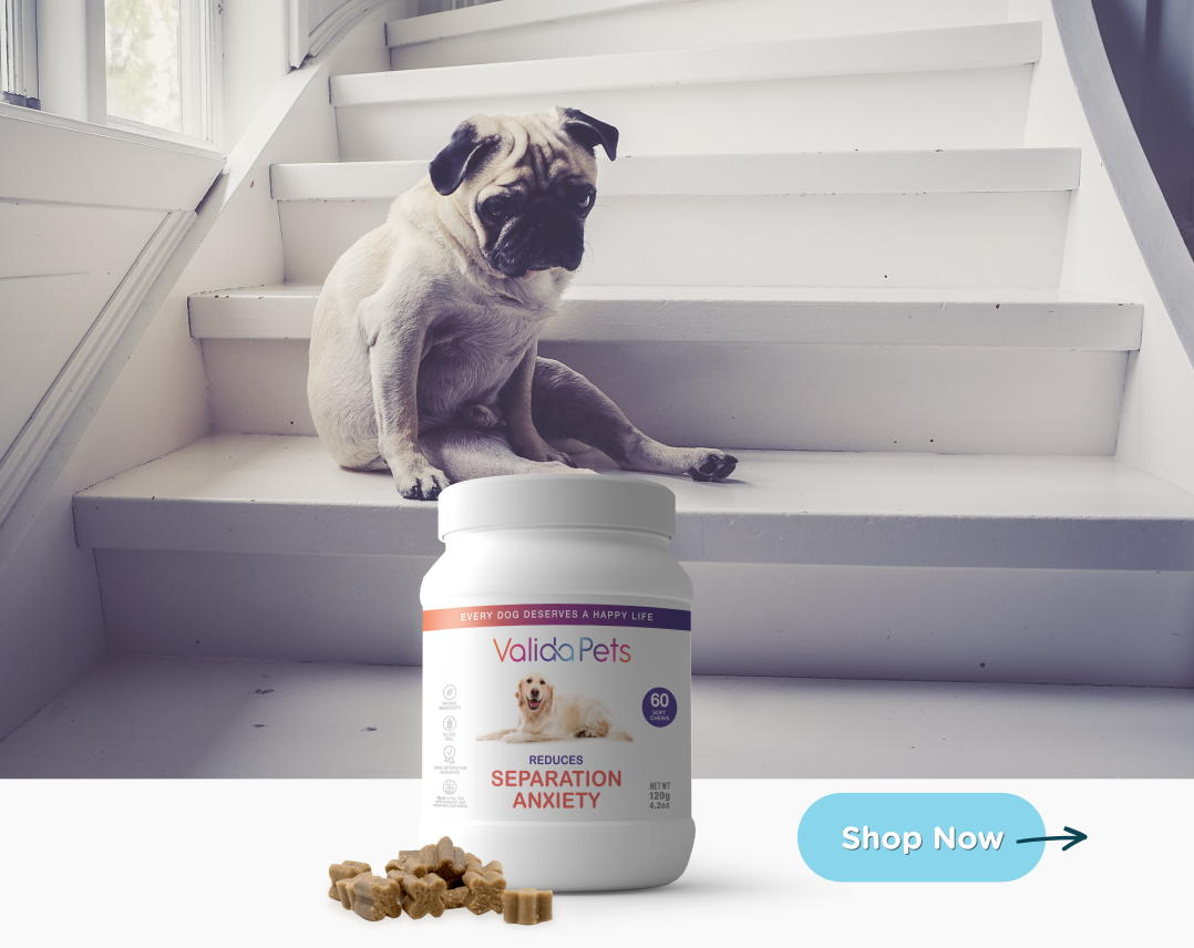 Valida Pets Anxiety Supplement