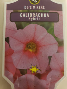 "Calibrachoa (million bells) - 4"" pot - various colours"