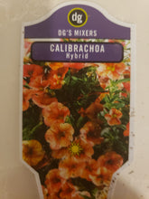 "Load image into Gallery viewer, Calibrachoa (million bells) - 4"" pot - various colours"