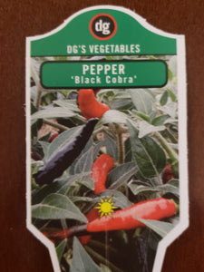 Super Hot Pepper -'Black Cobra'