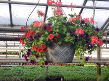 Load image into Gallery viewer, Mixed Plant Sun Hanging Basket in Weave Pot