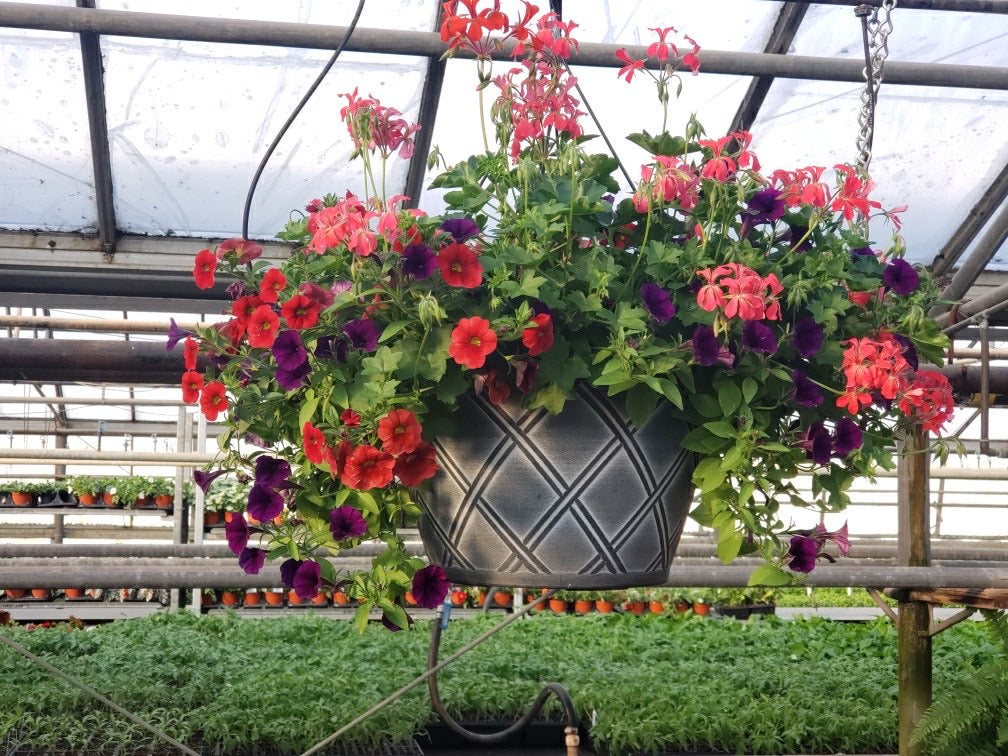 Mixed Plant Sun Hanging Basket in Weave Pot