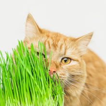 Load image into Gallery viewer, Cat Grass