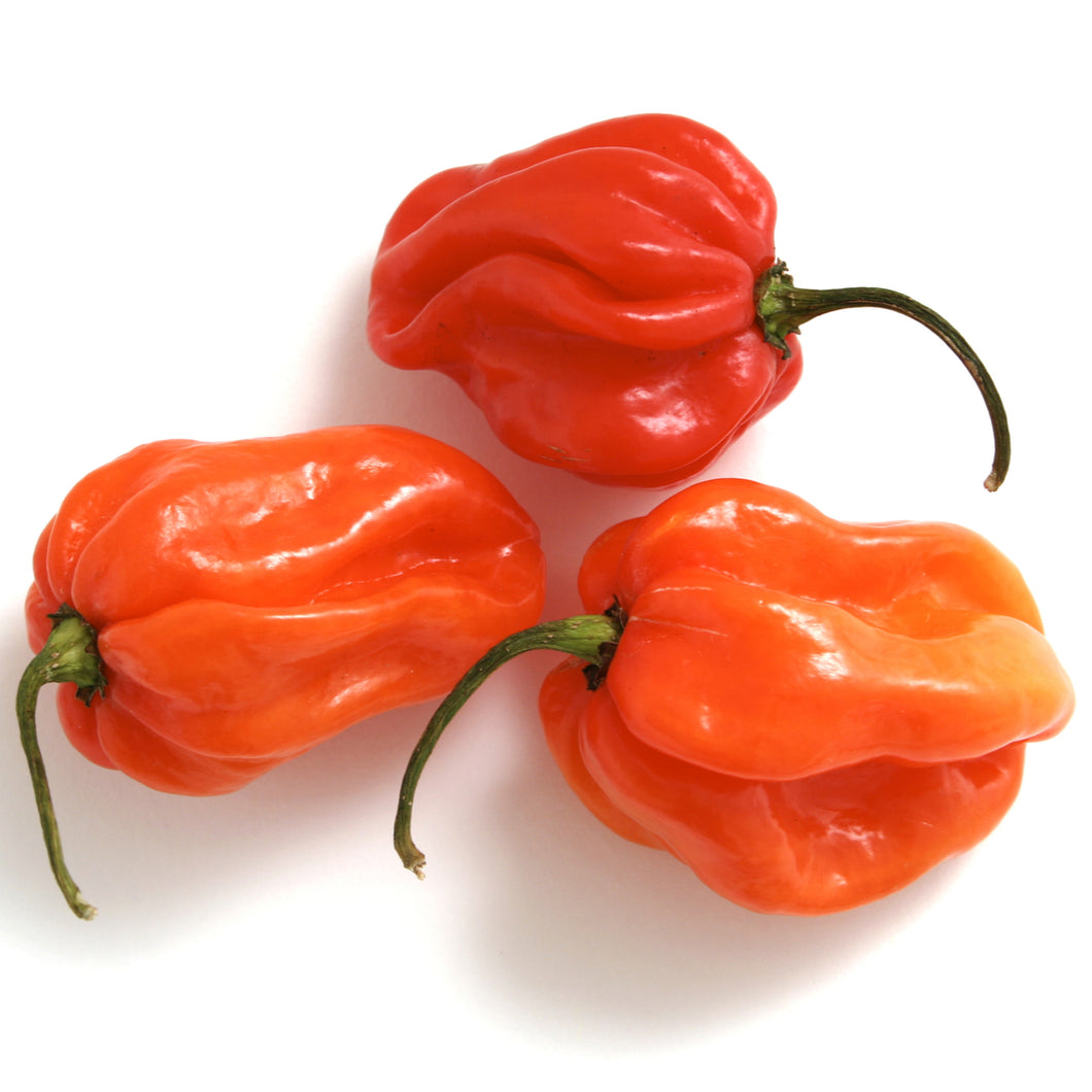 Hot Pepper - Scotch Bonnet