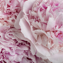 Load image into Gallery viewer, Peony - Large Pot - various colours