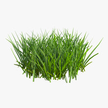 Load image into Gallery viewer, Seeds - * Grass Seed - Bulk (price per pound)