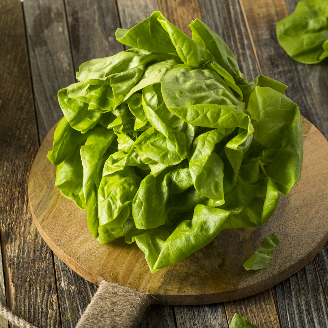 Boston Lettuce