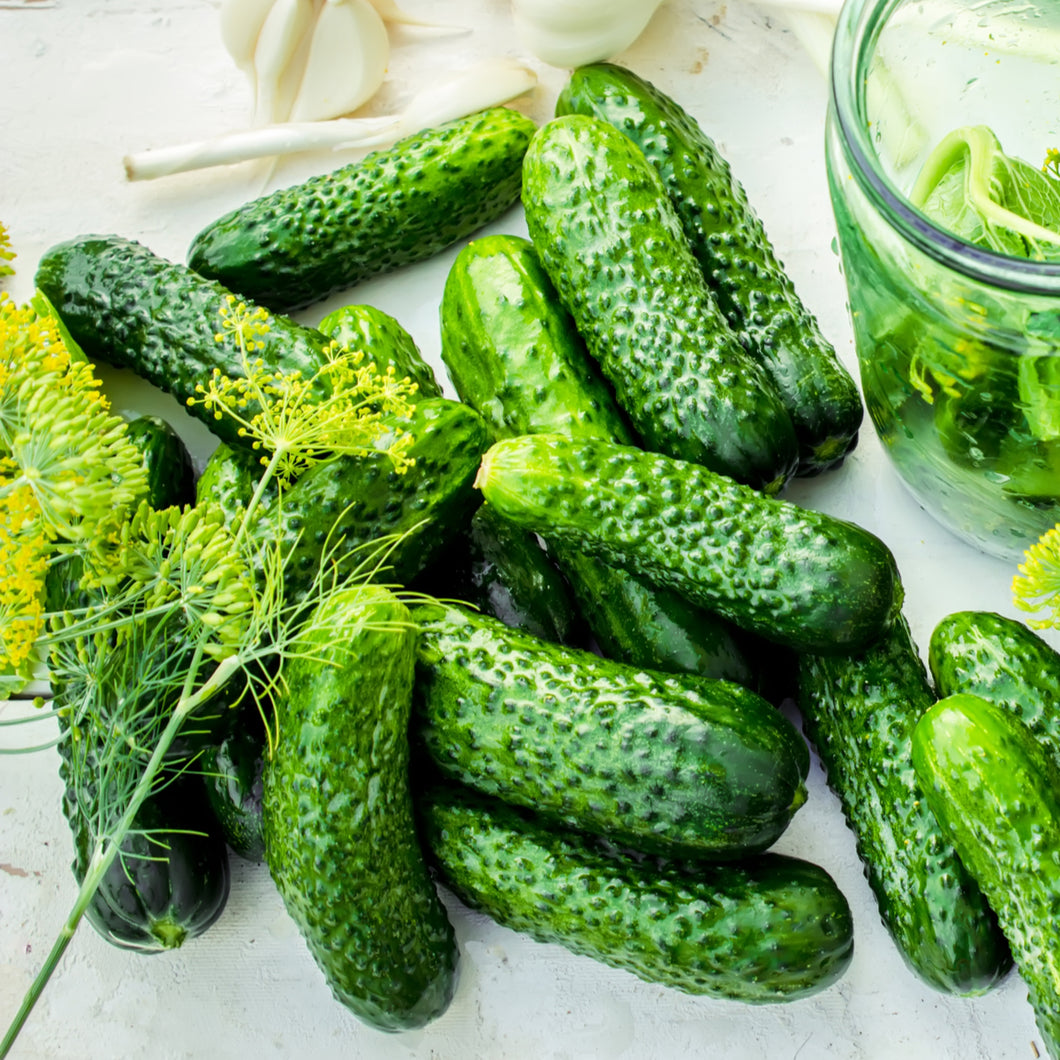 Seeds - Pickling Cucumber