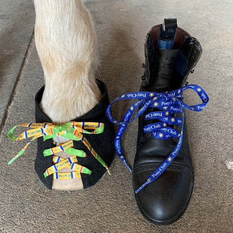 Pony Club Shoelaces