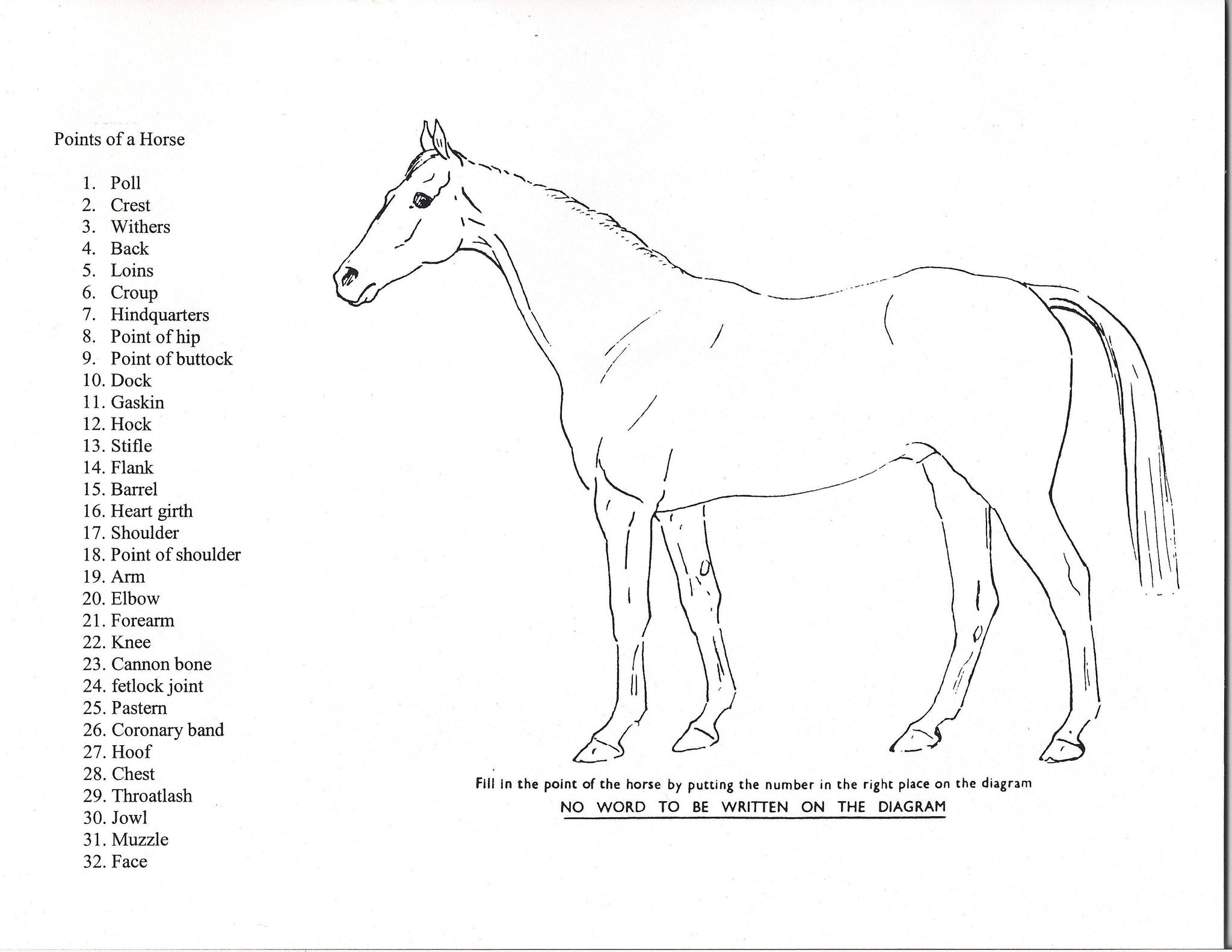 Points of the Horse Game – Shop Pony Club