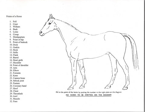 Points of the Horse Game