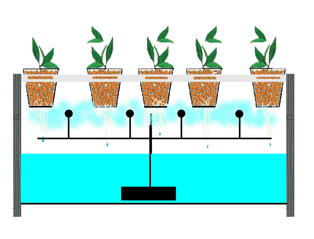 Why Use a Hydroponic System?