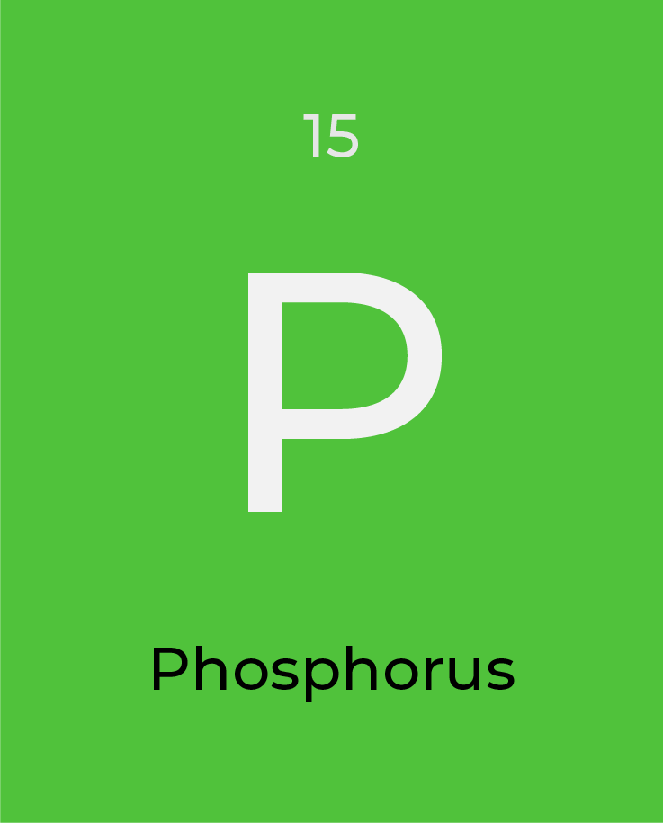 What is (are)… Phosphorous and Potassium