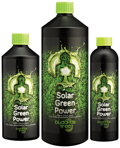 Buddhas Tree - Solar Green Power - NPK Technology Hydroponics